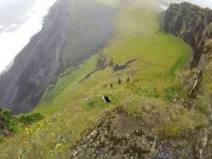 Que ver en Islandia: Frailecillos