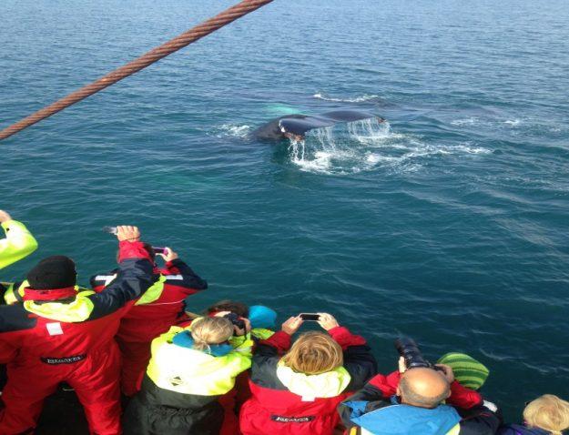 Vista de ballenas desde Húsavík
