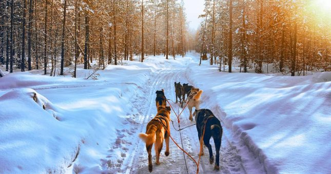 trineo-perros-rovaniemi