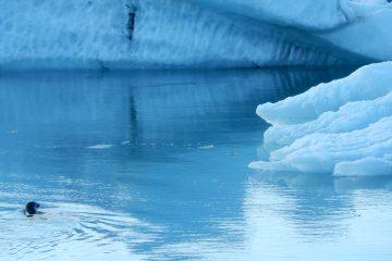 Hielo en la laguna Jökulsárlón Islandia