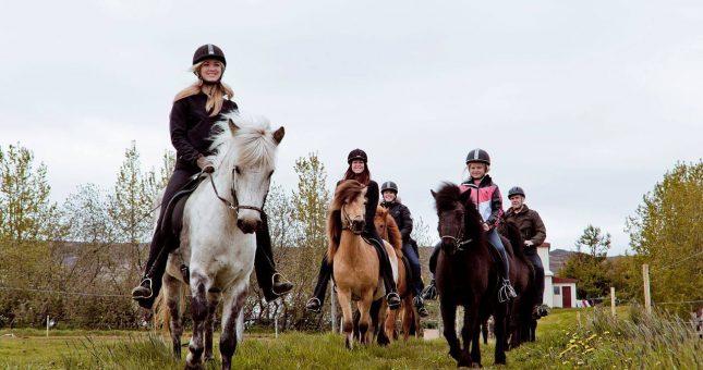 E:\httpdocs\arcticyeti.es\elementos\Excursiones\Excursión a caballo en el norte Islandia (Akureyri)